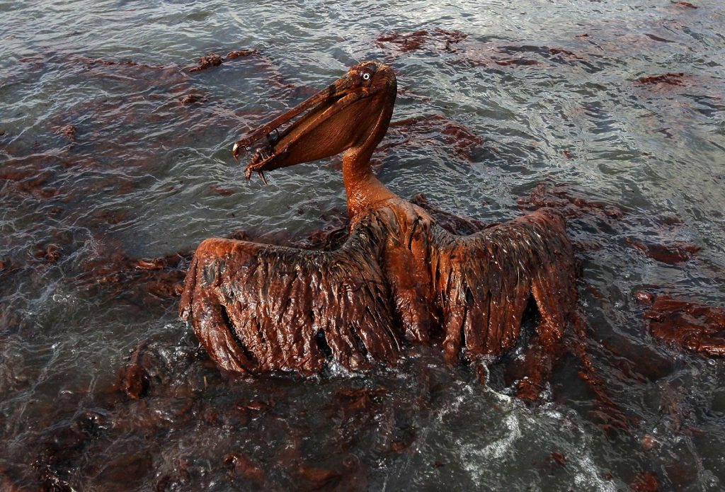Ten years later, BP oil spill continues to harm wildlife– specifically dolphins